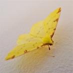 Unidentified Moth?