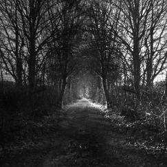 The Lane - reworking of Lane