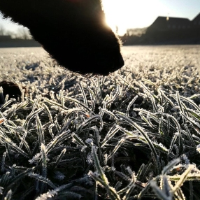 dogfrost