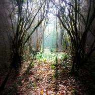 woods999